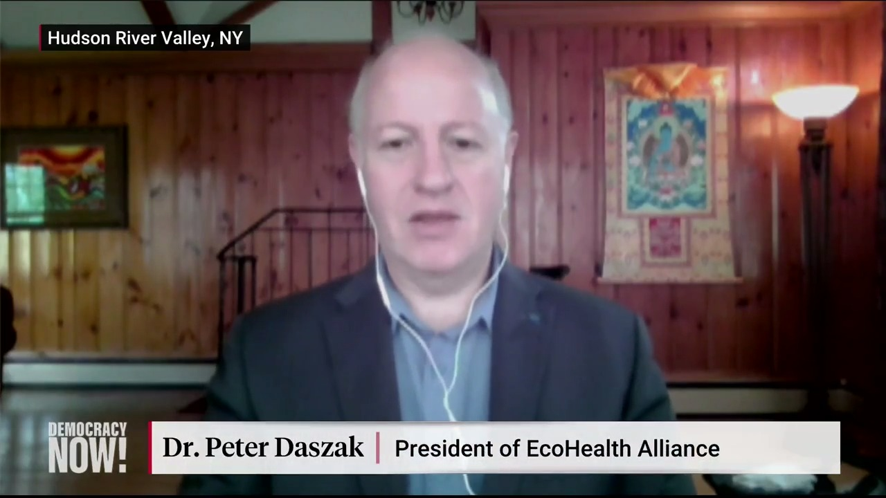"""Democracy Now! on Twitter: """"Despite all evidence pointing to the contrary,  President Trump this week suggested the coronavirus originated in a Chinese  lab. Zoologist and disease ecologist @PeterDaszak says that idea is """""""