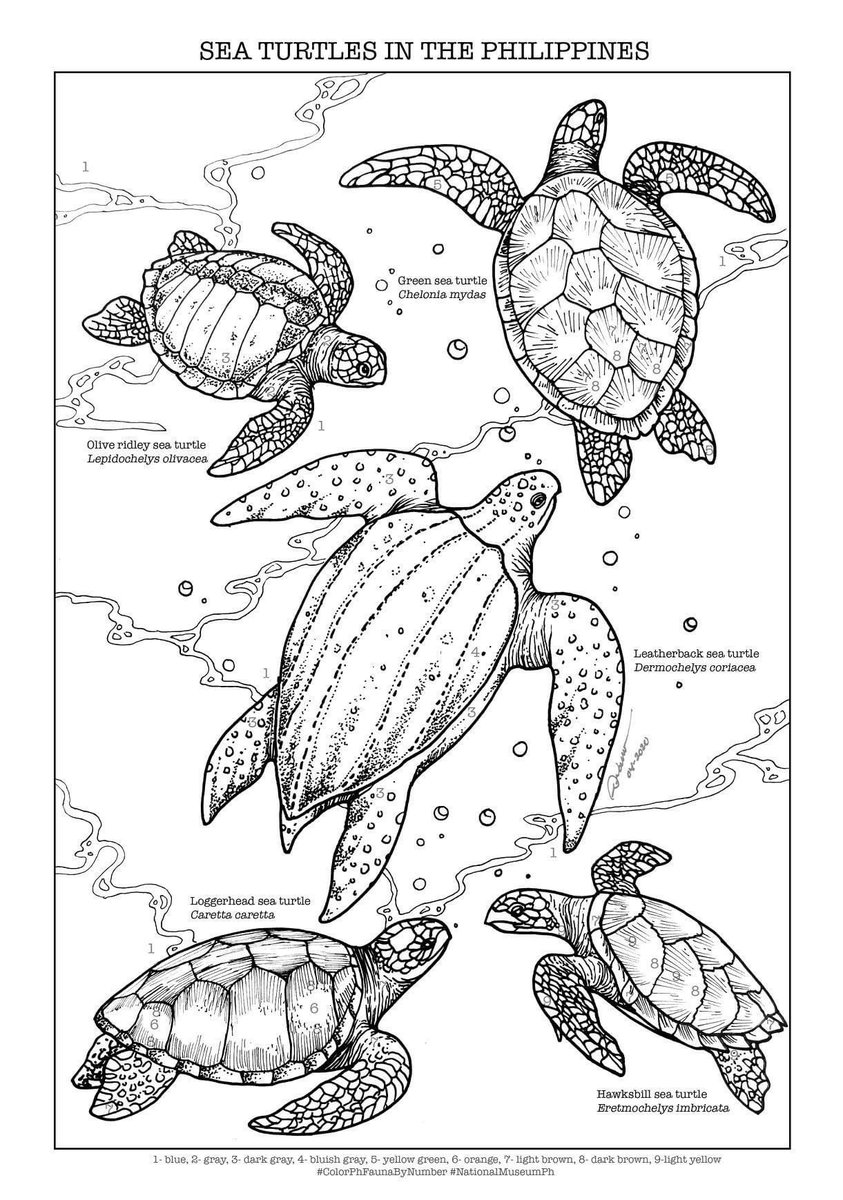 Top 10 Free Printable Cute Sea Turtle Coloring Pages Online | 1200x843