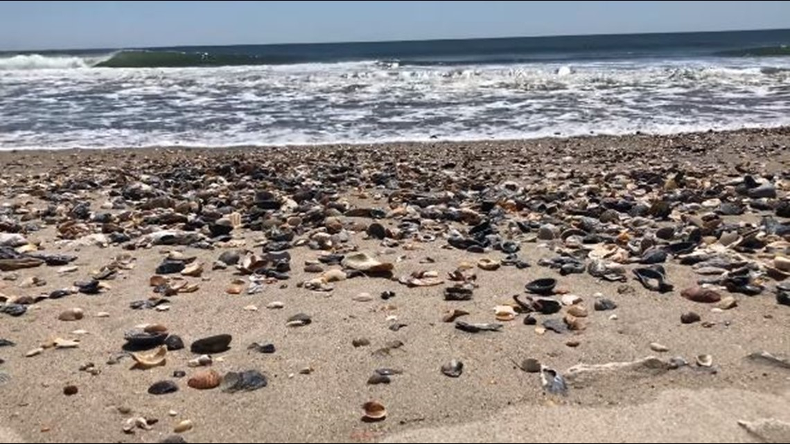 Outer Banks overrun with seashells due to lack of tourists https://t.co/KWHfvex678 #10TV https://t.co/TgVmk92Iuk