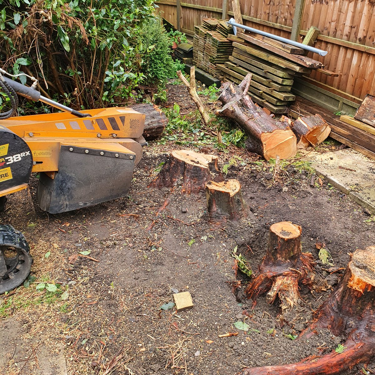 Tree stump grinding near Bury St Edmunds, removing a row of conifer tree stumps. We are here for all your tree stump gri…