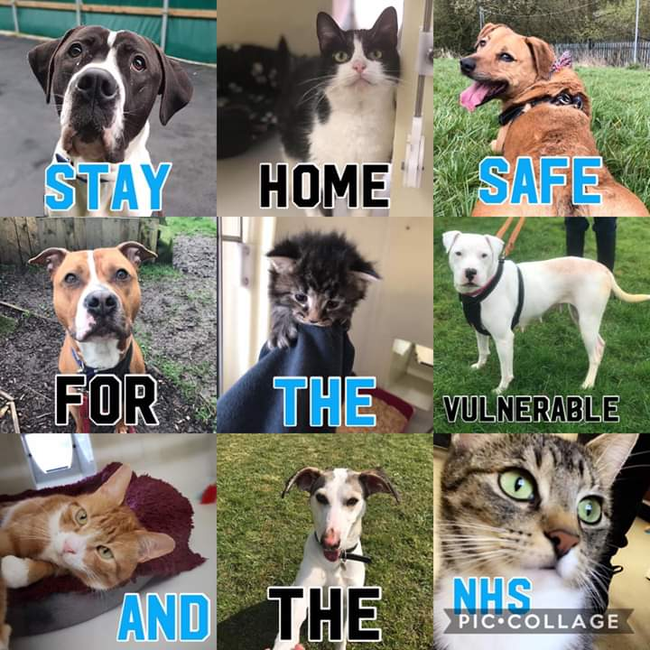 👏🩺Our animals want to say a massive thank you to the NHS who are keeping us well and strong so we can keep caring for them. Stay home and keep safe for key-workers, the vulnerable, your loved ones and animals too so we can keep looking after them 💖🐾 #ClapForCarers https://t.co/BettOERpwh