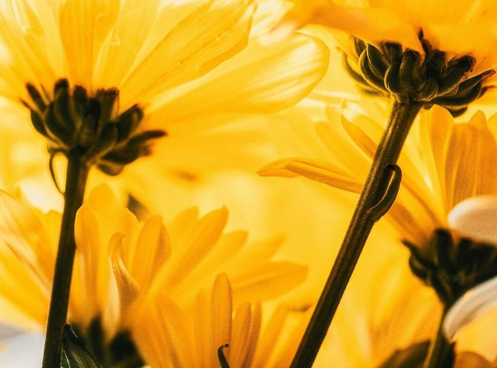 Floral perspectives.  #tagstagram #macros #macro #macrocounting #macrophotography #countingmacros #macro_captures_ #macro_love #macro_x #macro_world #macro_creative_pictures #macromania #macrophotos #macro_flower #macroshot #macrophoto #macrophotographyw… https://instagr.am/p/B_nDEL4B-FN/pic.twitter.com/8Vh8x01DTC