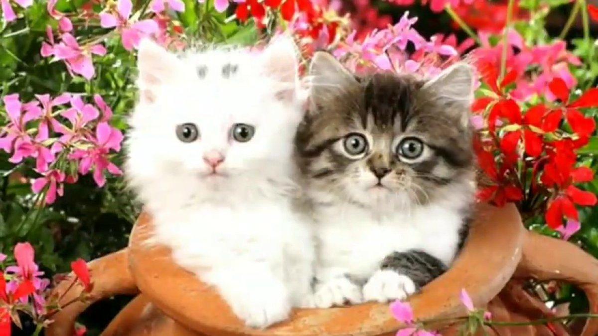 Meow Moe On Twitter Cute Cats Images Whatsapp Status Video Cats Cat Kittens Kitten Kitty Pets Pet Meow Moe Cutecats Cutecat Cutekittens Cutekitten Meowmoe Catsstatusvideo Catvideos Cutekittenclips Catsimages Cutecatsvideos Https
