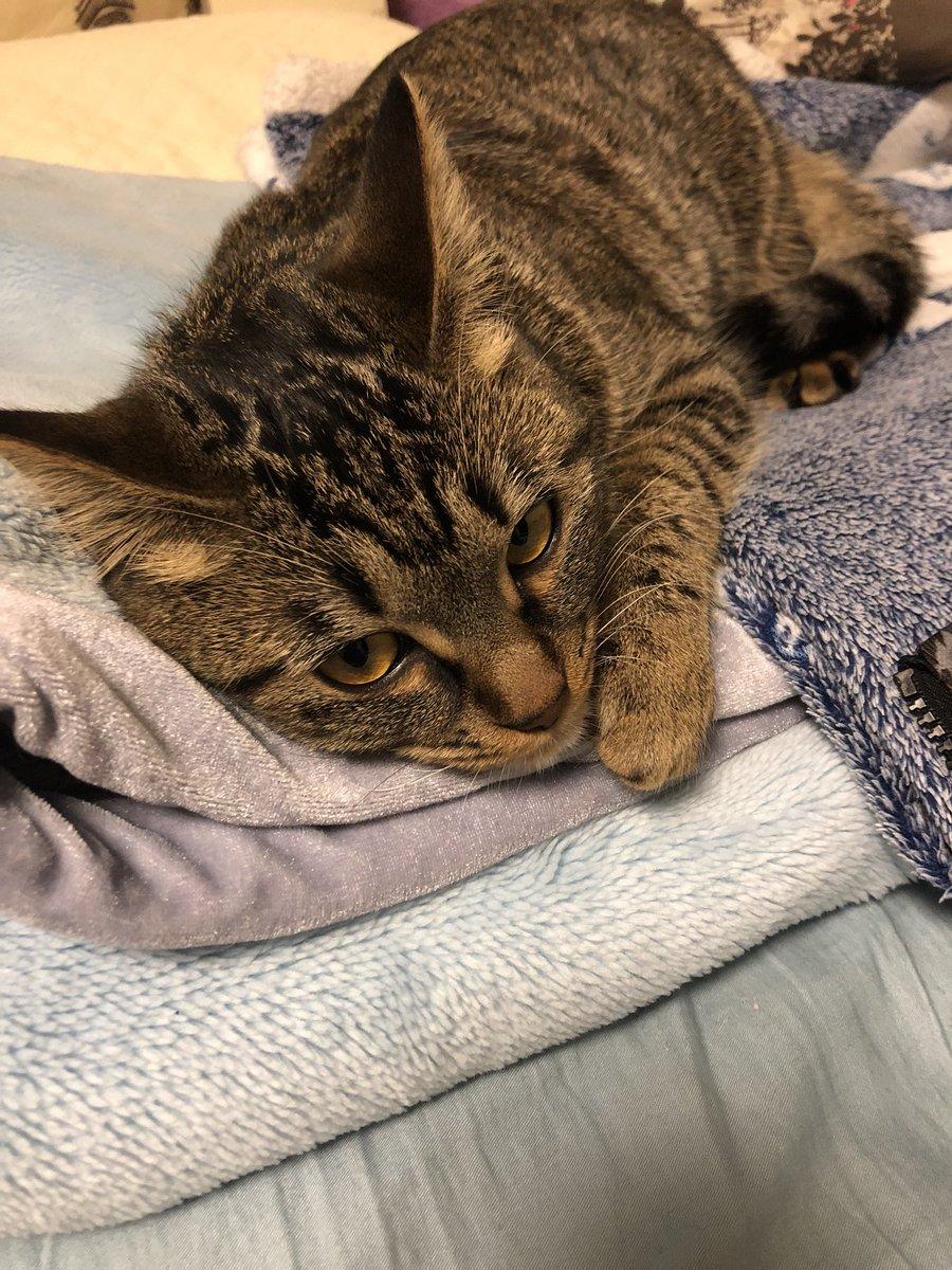 test ツイッターメディア - みんな、こんにゃちは〜🐱  #キジトラ #猫画像 https://t.co/ryBrCbdNqQ