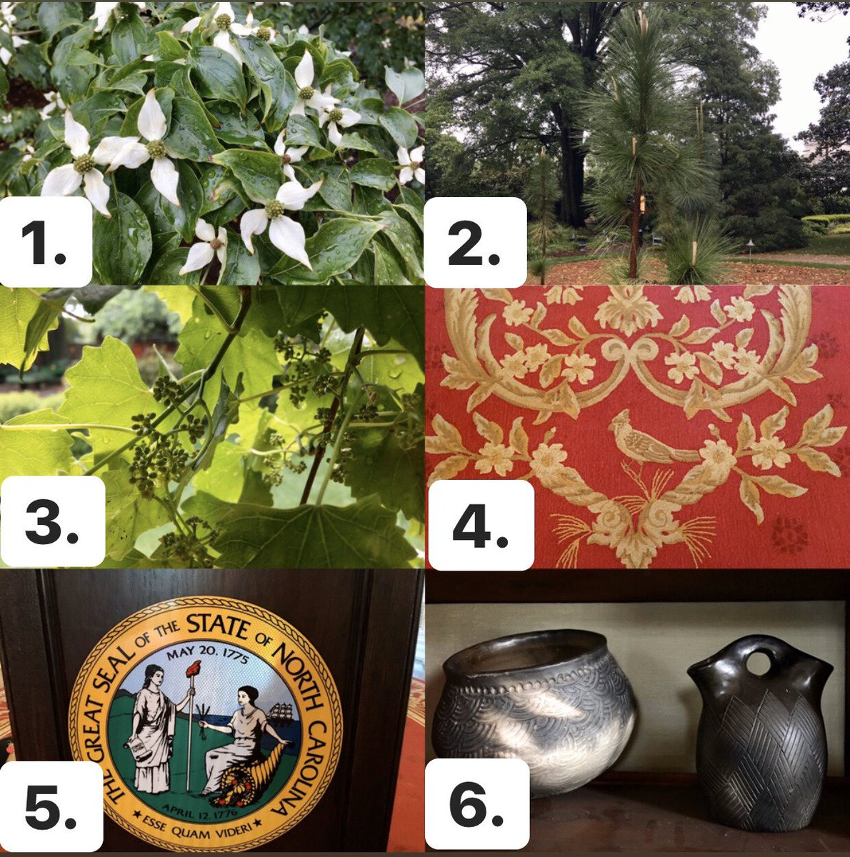 Kristin Cooper On Twitter We Re Joining The Ncsymbolsparty Can You Name These North Carolina State Symbols Found At The Nc Executive Mansion Ncstatecapitol Nchistoricsites Https T Co C2mjpvi9hy