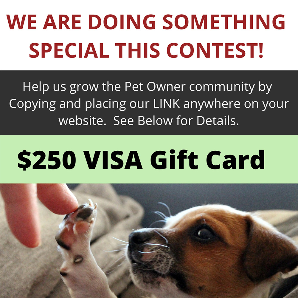Pet Owners can now enter to WIN a $250 VISA Gift Card by simply placing our website Link anywhere on your Website.  Watch Video for Rules to Enter.  https://gleam.io/M3j87/pet-owners-can-win-a-250-visa-gift-card-by-gigglepets … #Giveaways #gigglepetspic.twitter.com/eJaI8shG6T