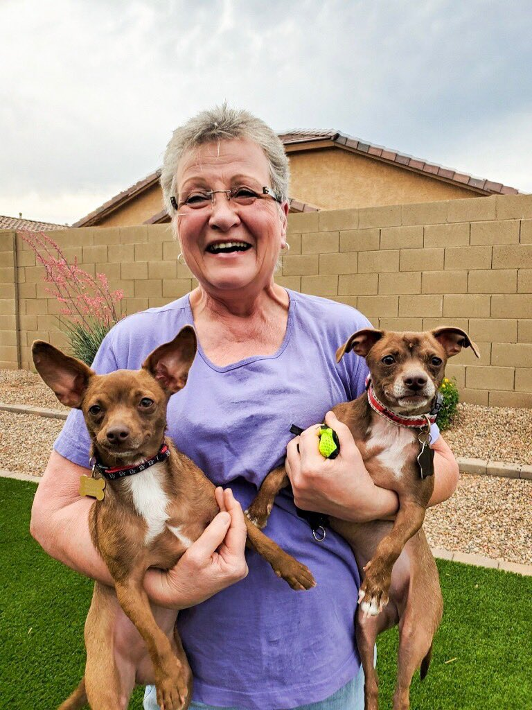 Sidney & Soluna were adopted!...just in time for #NationalAdoptAShelterPetDay! Since the sisters were rescued in the Edison-Eastlake community, @AZK9 named them after @CityofPhoenixAZ's Sidney P. Osborn and Soluna housing developments. #AdoptDontShop