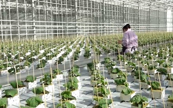 Eight ha greenhouse complex launched in #Cherepovets https://www.hortidaily.com/article/9208495/eight-ha-greenhouse-complex-launched-in-cherepovets/ …pic.twitter.com/87maxoN7F3