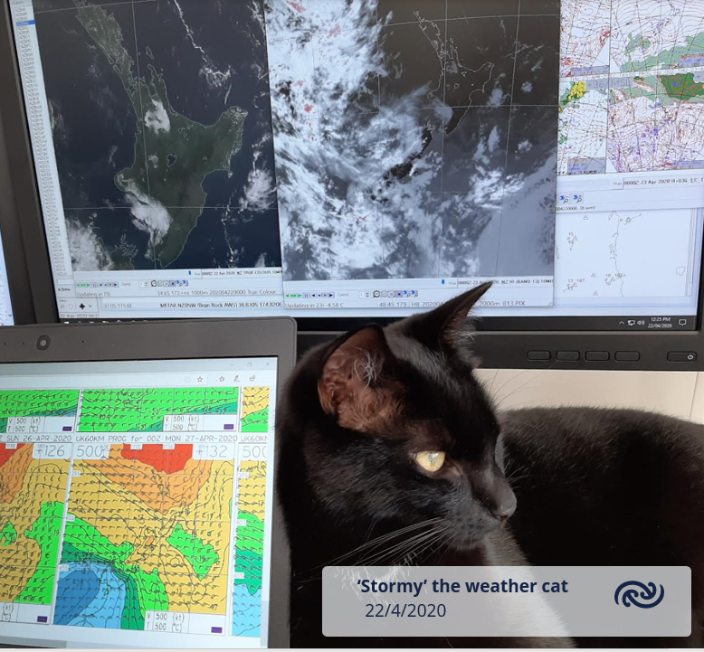 "'Weather cats' have been popping up from time to time on twitter. Here's one of ours - the aptly named Stormy, ""helping"" one of our WFH meteorologists in Auckland. ^GG https://t.co/iVa9GkCzin"