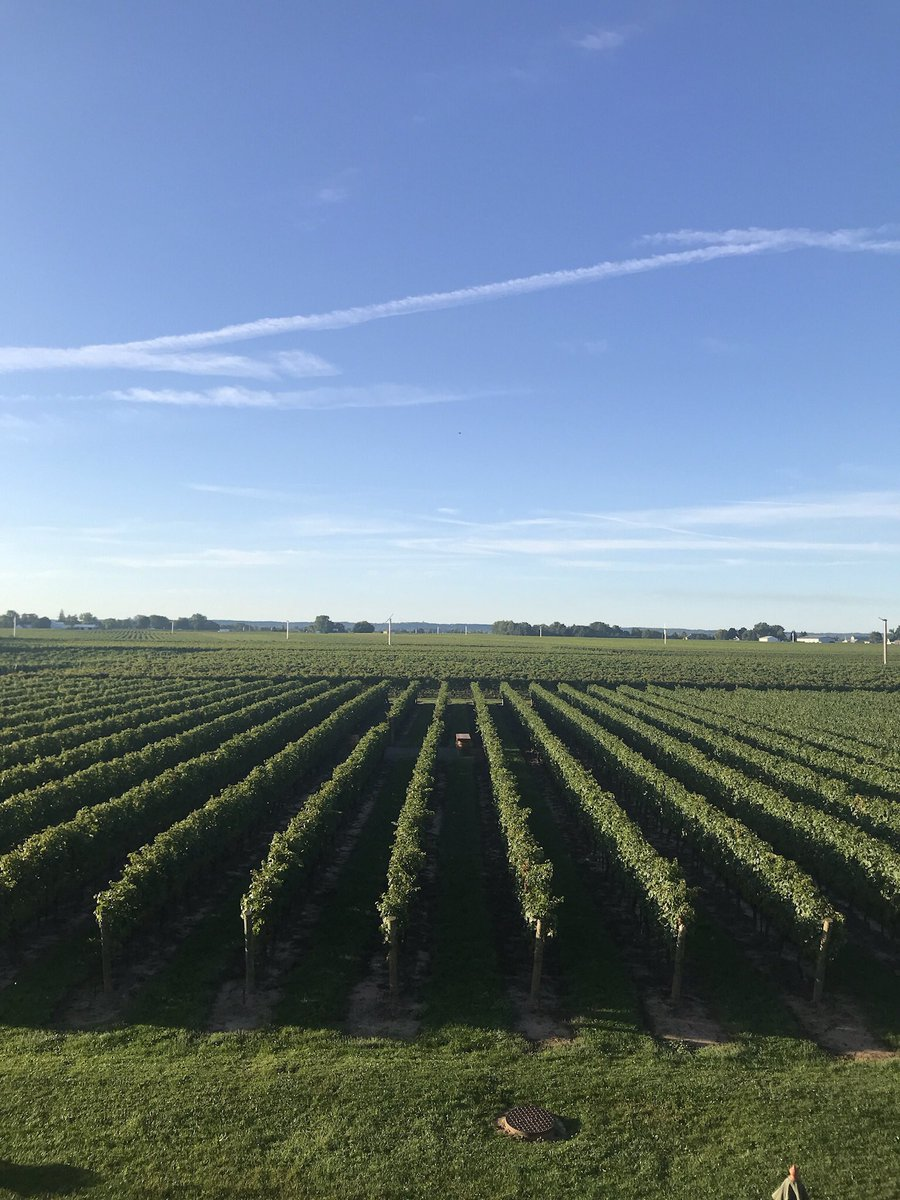 As we celebrate #EarthDay today, I am so proud to work in an industry that is rooted in the earth and sustainability is part of our DNA. @ArterraCanada @Jackson_Triggs #supportlocalBusiness #canadianwine https://t.co/Fk2OxOqsGQ