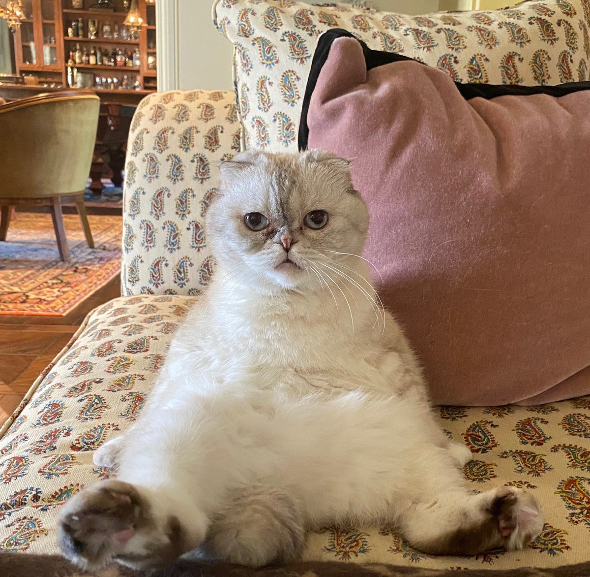 "Taylor Swift on Twitter: ""Captain Olivia Benson off duty like -… """