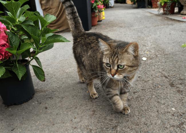 Dos gatos dan positivo por coronavirus en Nueva York
