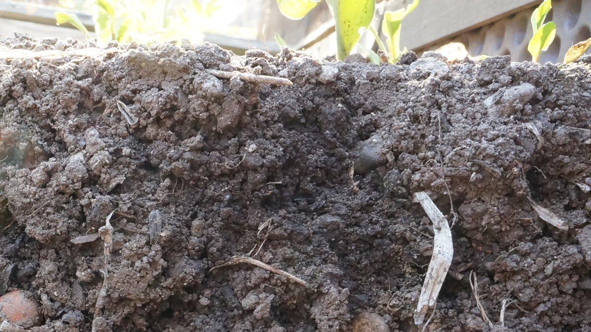 #journeemondialedelaterre #journeedelaterre   #EarthDay2020 #soil #health https://t.co/AHnCmOY6IU