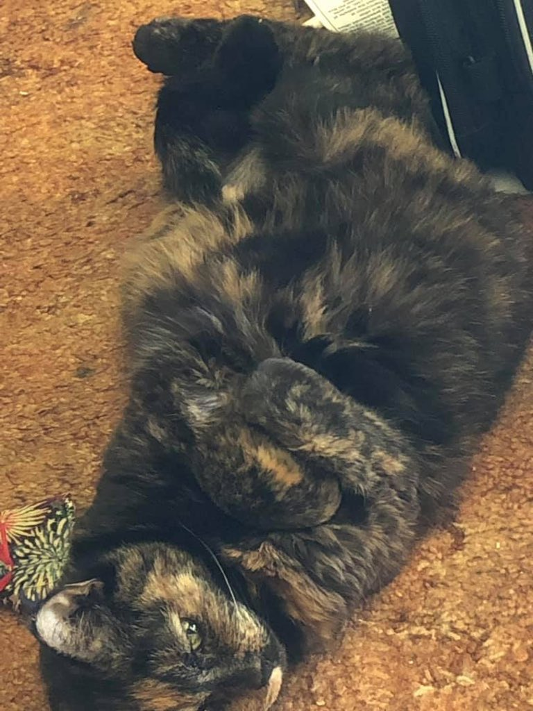 @WinkProgress My Callie kitty.