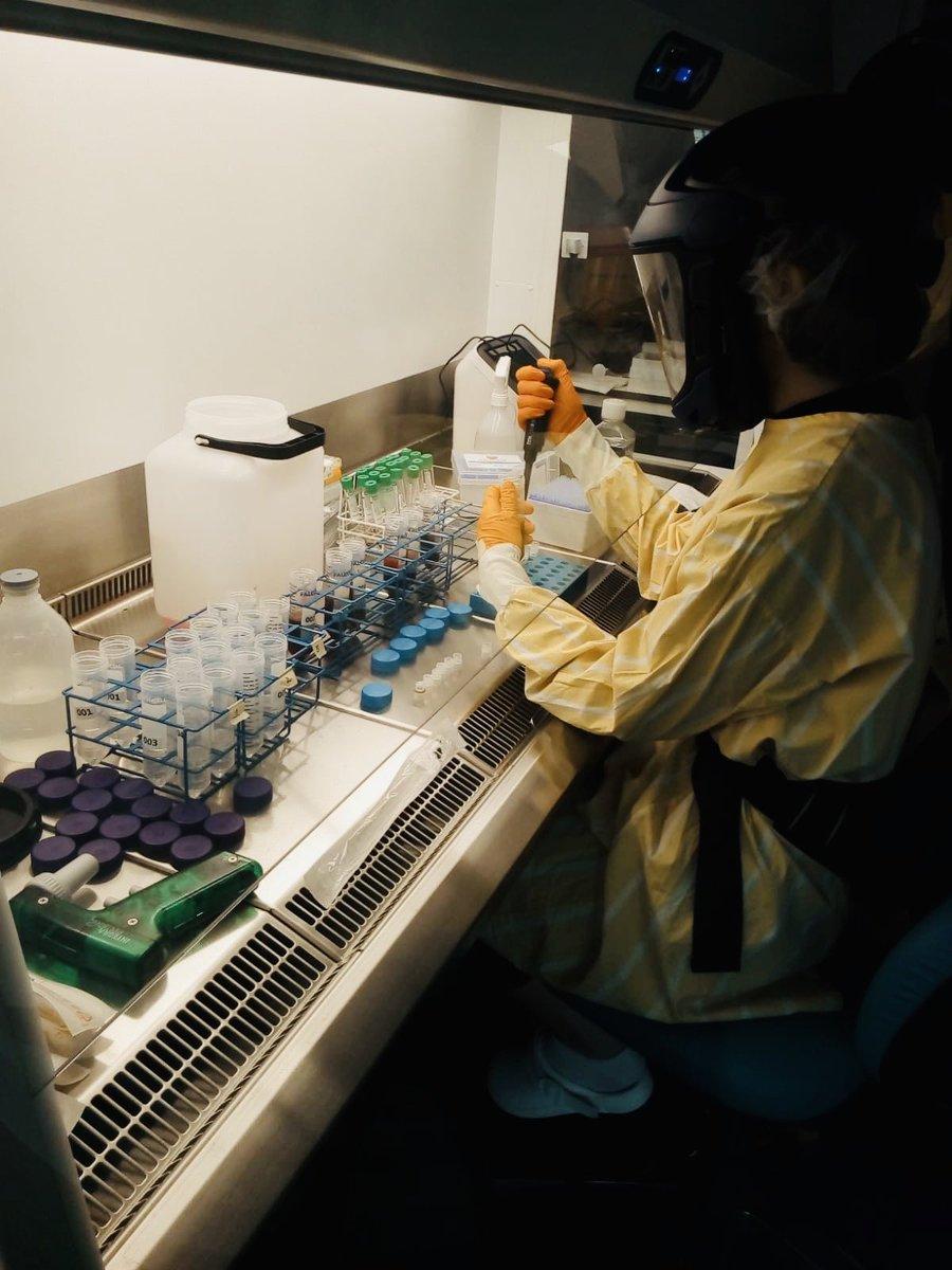 First Covid-19 samples in the lab after 5 wks of hard work w logistics, regulatory issues etc. #karolinskaCovid19 Collaborative effort btw @CIM_Sweden @KarolinskaUnsju @karolinskainst Thx @2017Kaw100 for support! https://t.co/D4wU9fszq5