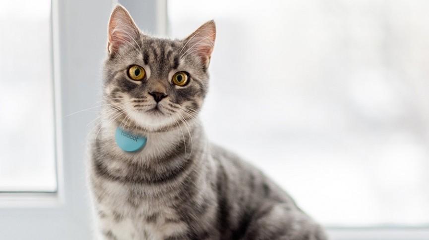 Die besten GPS-Tracker für Katzen: https://t.co/eSly5adQjt https://t.co/DKzKfgDaZZ