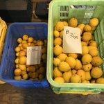 【お得情報】静岡県産のレモンが1キロ500円で購入できるツイートが話題に