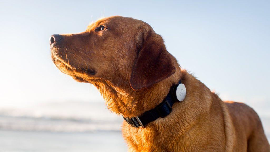 Die besten GPS-Tracker für Hunde: https://t.co/fl0eILfu3b https://t.co/0s0RPMqtdu