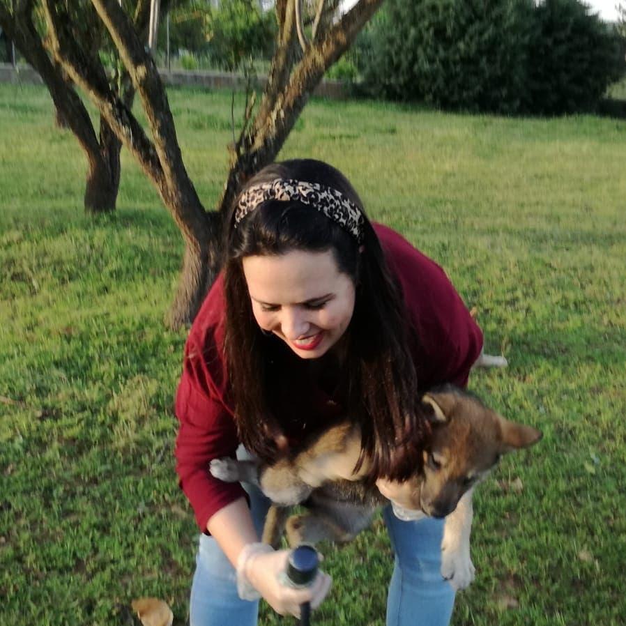 Viernes con animales, viernes de felicidad #reportera #vlcak #czechoslovakianvlcak #wolfdog #wolfdogcommunity #realwolfdog #czechwolfdog #aestahoraexpic.twitter.com/rht247anc3