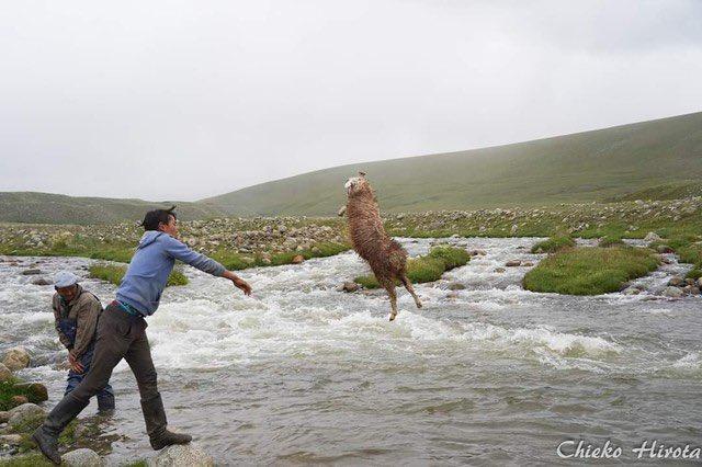 川で子羊を水洗いするやつも最高なんですよね