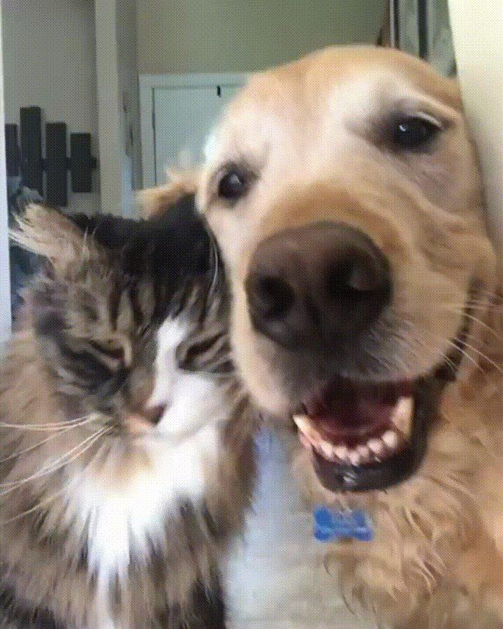 гифки собачки кошки камень светло-серого цвета