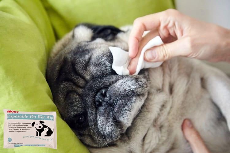EDI Purified Water, Spun-laced Non-woven Fabric, Moisturizer, Bactericide & Disposable Pet Wet Wipes. Order Now: https://t.co/HCjpBN36uQ…/disposable-pet-wet-wipes/ https://t.co/iekMmrNiX0