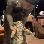 タイで夜間外出禁止令を破った結果?ネコが逮捕された!