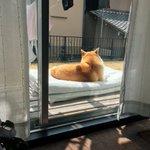 天気がいい日はベランダで日向ぼっこ・布団を出した瞬間にわんちゃんが・・・。