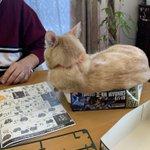 ガンプラの箱に入りたがる猫がかわいい!