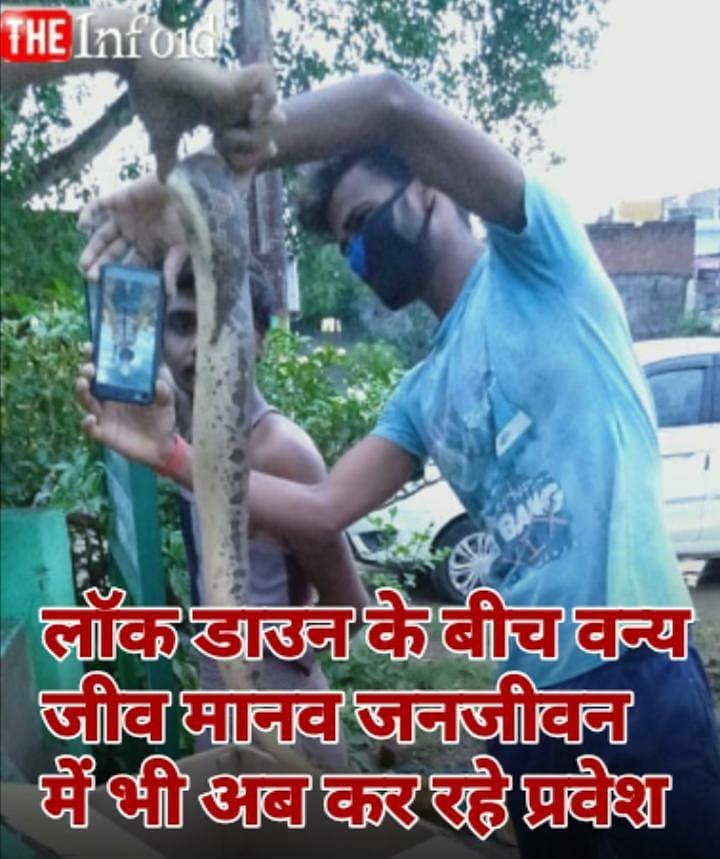 वाराणसी *अजगर निकलने से मोहल्ले में मचा हड़कंप* । थाना शिवपुर के पास स्थित बसही गांधी चबूतरे के पास आज सुबह एक अजगर का बच्चा मिला जिससे स्थानीय लोगों में अफरा-तफरी का माहौल बना। पूरी खबर👇  https://t.co/NtE9CWUNiZ #Varanasi #varanasipolice #natureslover #snakelover #लॉकडाऊन # https://t.co/mGxopMwdzb