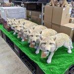 お庭の手入れをする人が増えて犬猫の置物が売り切れた結果?!ホームセンターにチベットスナギツネが増殖!