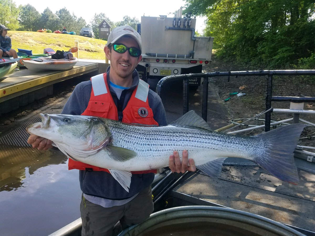 N c striped bass club