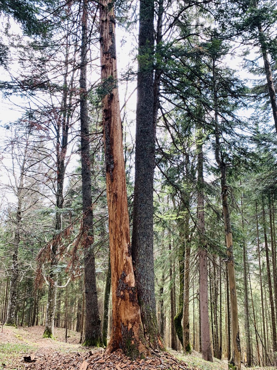 Tree_Mortality photo