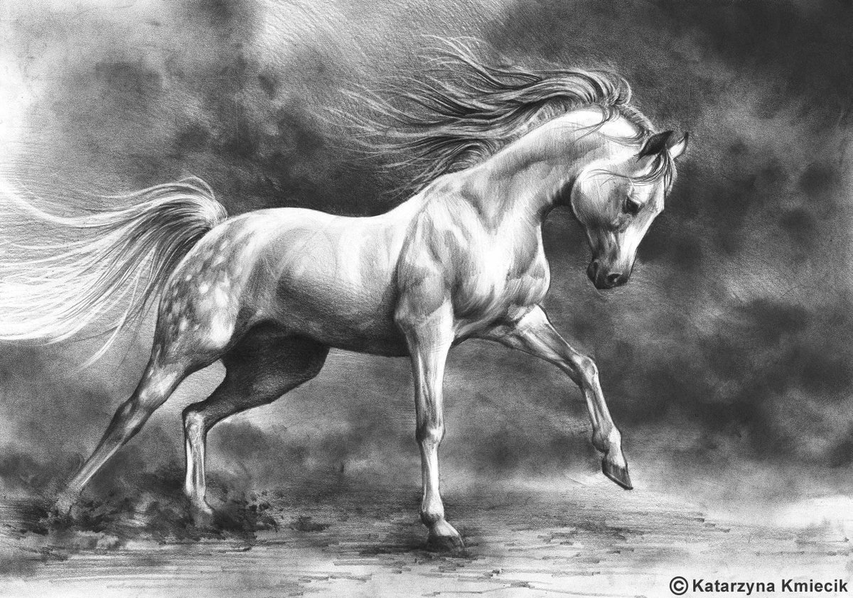 Katarzyna Kmiecik Artist And Illustrator Pa Twitter Pencil Drawing A Bit Of Graphite Powder For The Background Of The Running White Horse A3 2017 Sold Art Prints Of This
