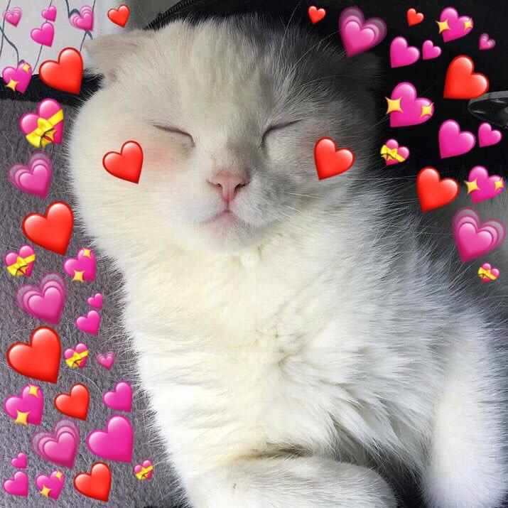 Фото котят с посланием о любви