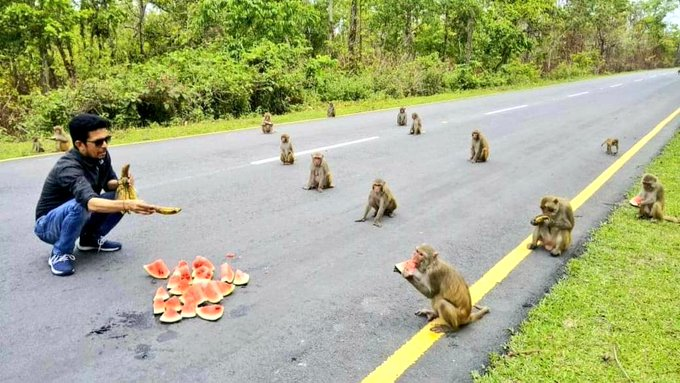 En la India, monos demuestran disciplina en el distanciamiento social