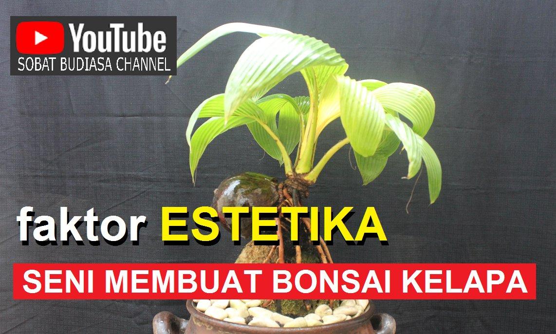 K Budiasa On Twitter Faktor Estetika Dalam Membuat Bonsai Kelapa