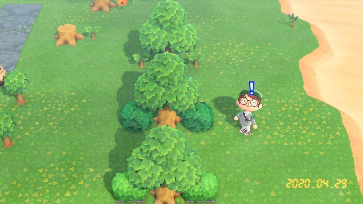 の あつ を 木 森 止める 成長