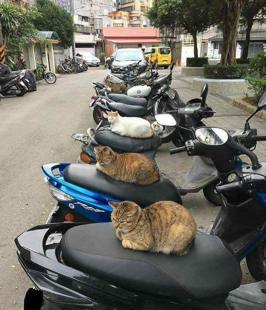 バイクで遊びに行けないようにシートに猫を召喚した発想がすごい