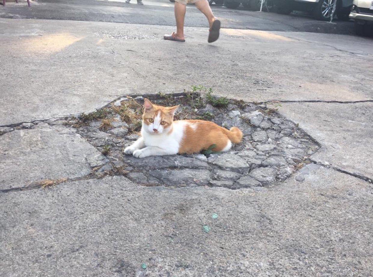 犬と猫が路上でくつろいだ結果?攻撃受けたみたいになってる!