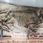 Image for the Tweet beginning: Korat Fossil Museum, Nakhon Ratchasima.