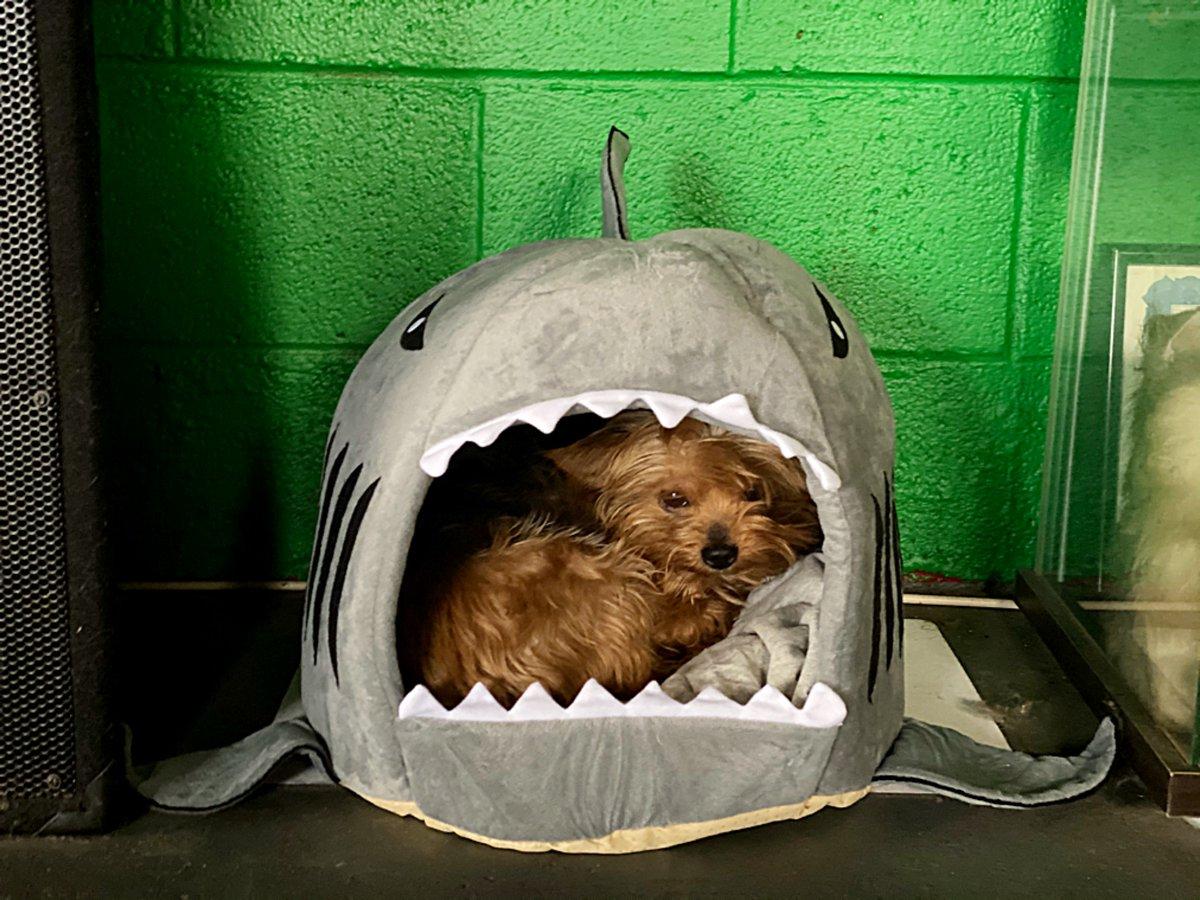 If you need me I'll be in my shark. 👅 https://t.co/PO22tXv6aq
