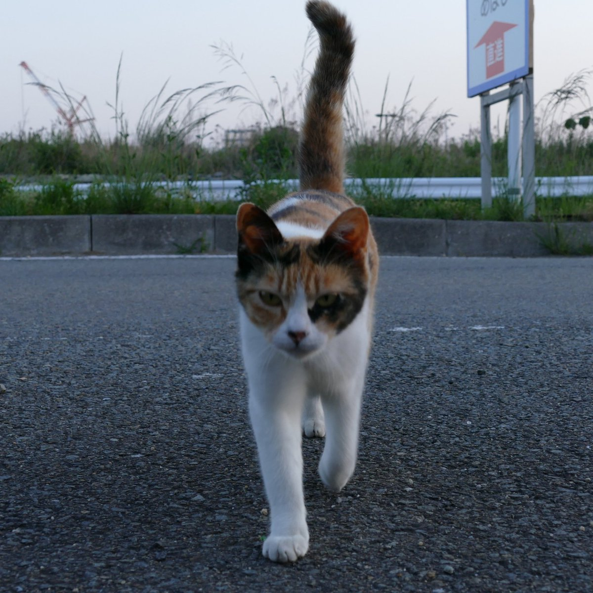 の 気持ち 野良猫 玄関で待ち伏せし、必死で部屋に入りたがる野良猫 その理由とは