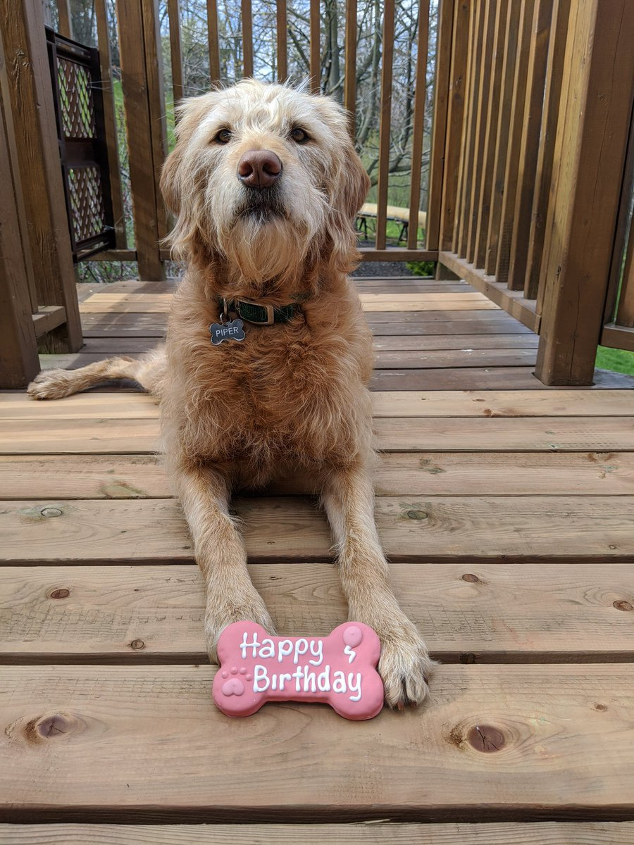 All my co-woofer Piper wants for her 3rd birthday is for people to stay home and #FlattenTheCurve so she can play safely with her friends at the dog park soon 🎂 #dogcelebration https://t.co/yXIzNLczKS