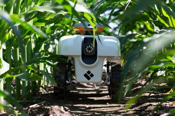 #robot e #machinelearning per ridurre l'uso di acqua, energia, fertilizzanti e pesticidi in agricoltura. Visione artificiale ed apprendimento automatico giocano ruolo chiave nel prevedere la resa nei campi.   https://t.co/emQmf7wmbE https://t.co/pDspJpzybU