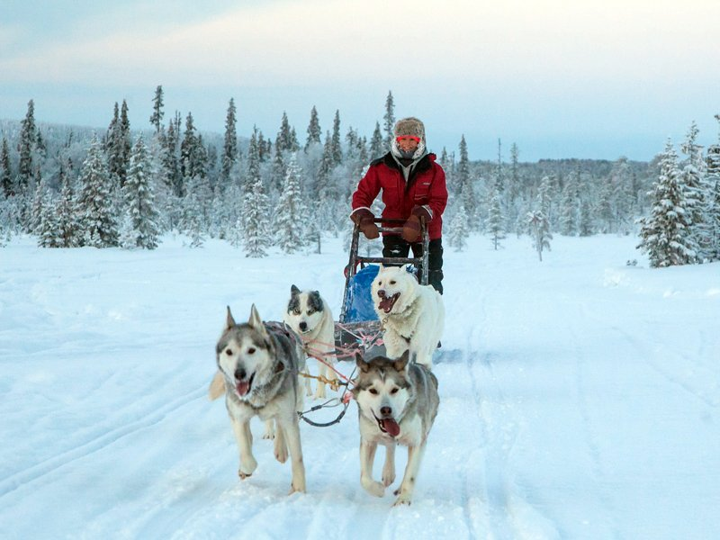 Hut to Hut Aurora Husky Safari in Lapland, Finland - 7 days/6 nights. Book for next winter before 31st Aug 2020 and save £86/person (5%) on standard prices! naturetravels.co.uk/dog-sledding-f… #winteradventures2021 #naturetravels #dogsledding