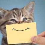 Image for the Tweet beginning: Kan man verkligen leva bra