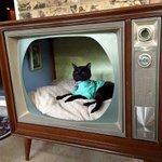 レトロ感が良い!古いテレビを再利用したら、猫ちゃんハウスになった。