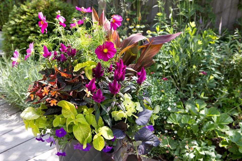Want ideas for colourful containers to plant now? Discover 20 of the best: https://t.co/cRk4oP3Qjs #gardeninspiration https://t.co/f63XC8OehX