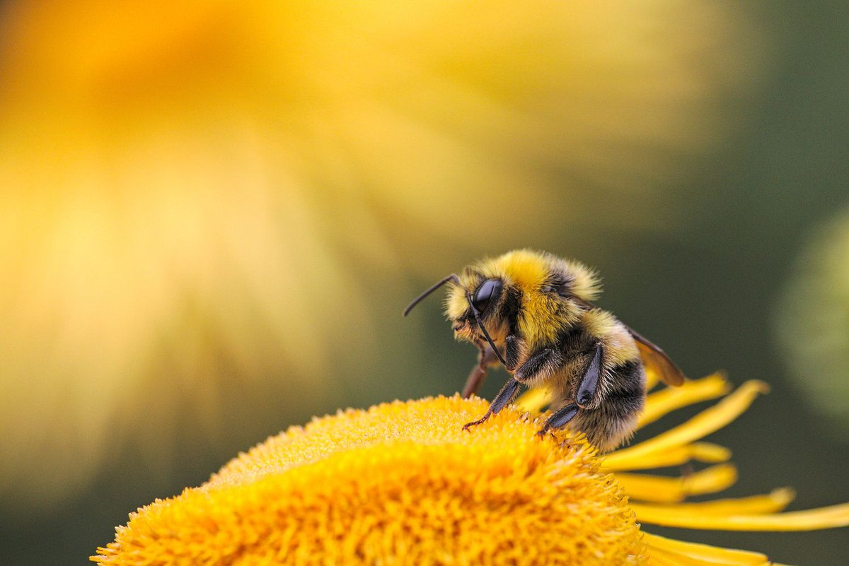 Making an actionable change in your #community can often seem impossible in the current political climate, but@cvearthguardianshave shown how accessible this change can really be! Peep the full blog here- buff.ly/3dHVfW0 #earthguardians#worldbeeday#permaculture